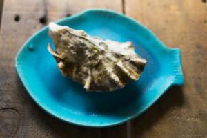 牡蠣(イメージ)